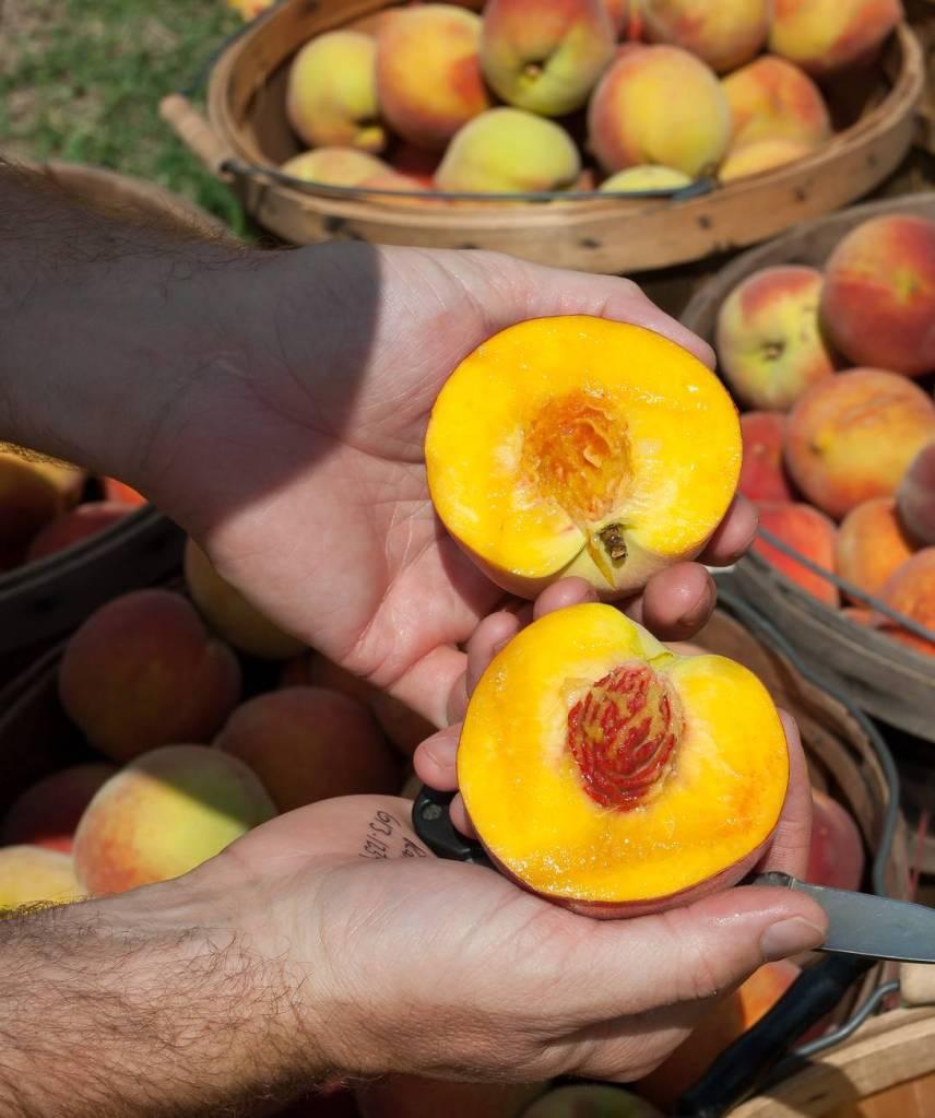 Peach cut in half
